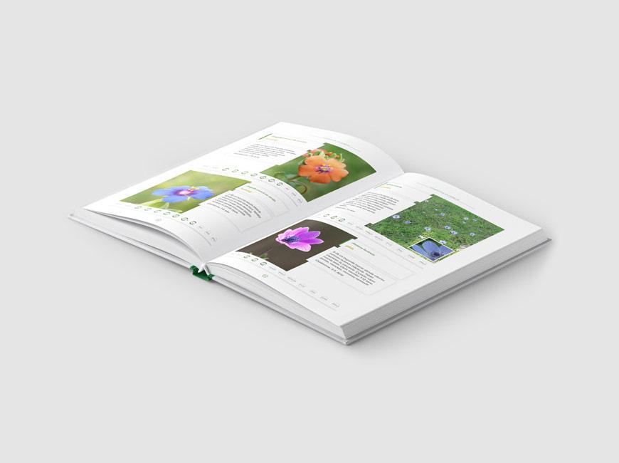 Çekmeköy'ün Kır Çiçekleri Kitap Tasarımı